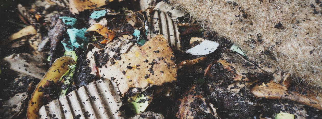 Cartons et légumes nourrissent les vers de terre